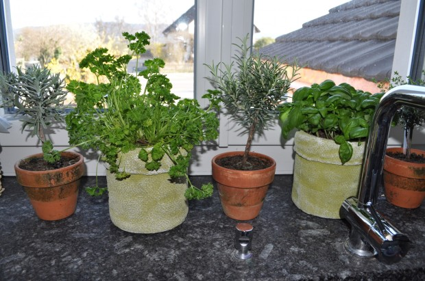 My little kitchen-window-herb-garden
